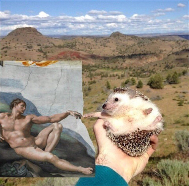 "Фречка мікеланджело ""Створення Адама"", але з їжаком"