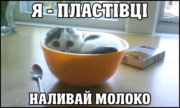 Кошеня (чи кіт) сидить в тарілці. Я - пластівці. Наливай молоко