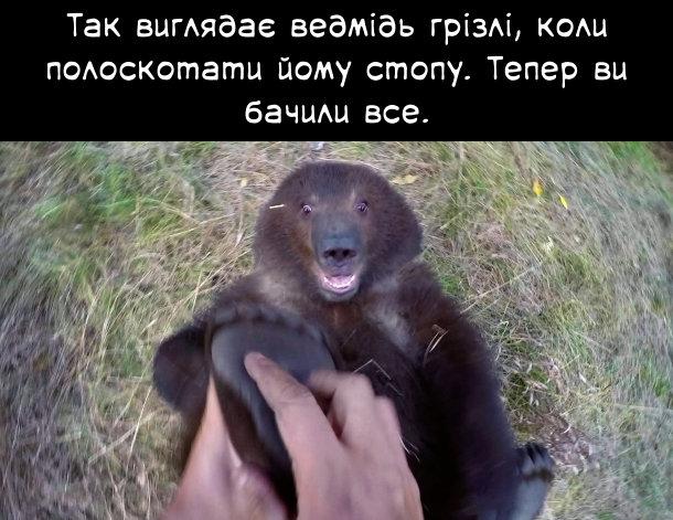 Так виглядає ведмідь грізлі, коли полоскотати йому стопу. Тепер ви бачили все.