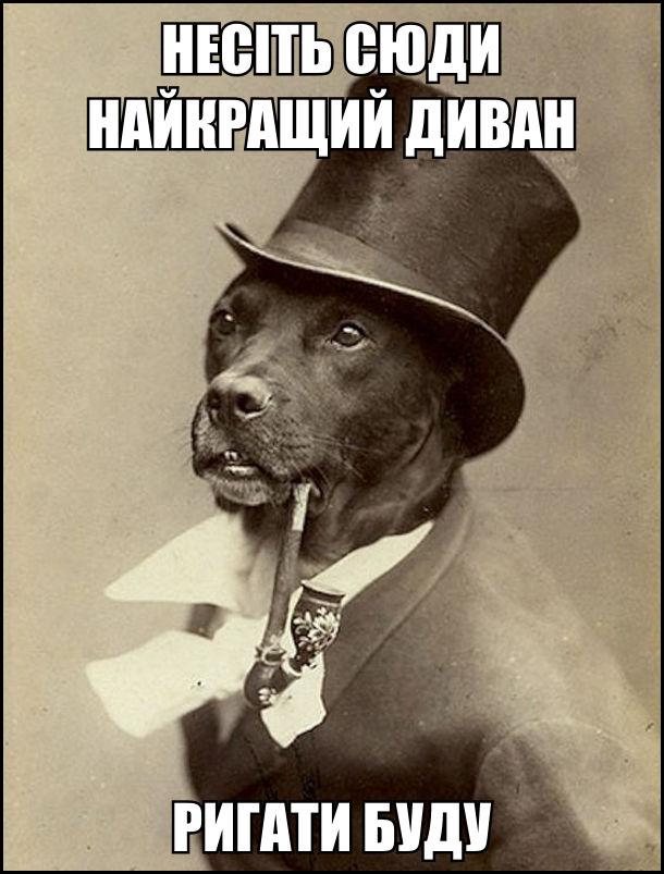 Пес-аристократ барон фон Гав. Пес в костюмі джентльмена і з люлькою. - Несіть сюди найкращий диван, ригати буду