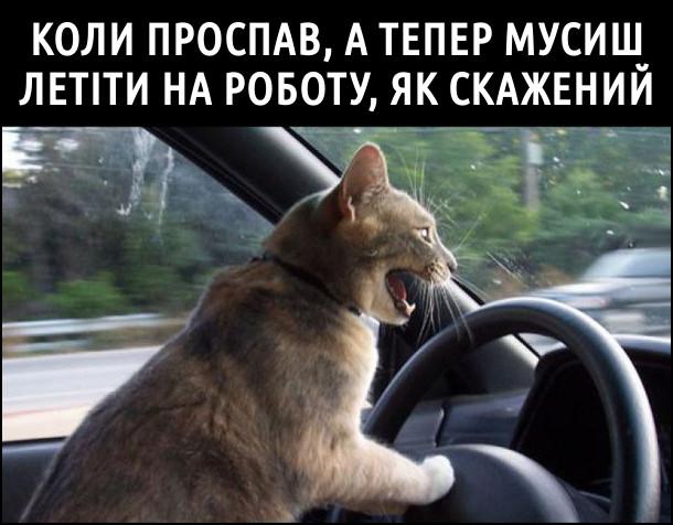 Коли проспав, а тепер мусиш летіти на роботу, як скажений. На фото: кіт за кермом розкрив пащу