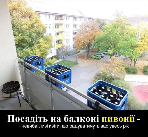 Посадіть на балконі пивонії - невибагливі квіти, що радуватимуть вас увесь рік. Пиво на балконі