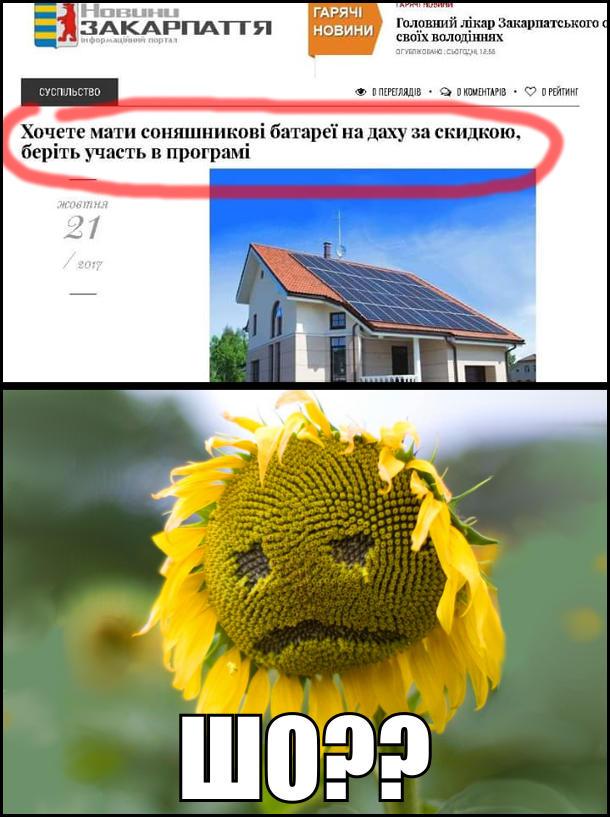 На сайті Новини Закарпаття новина під заголовком: Хочете мати соняшникові батареї на даху за скидкою, беріть участь у програмі. Соняшник з сумним обличчям: - Шо??