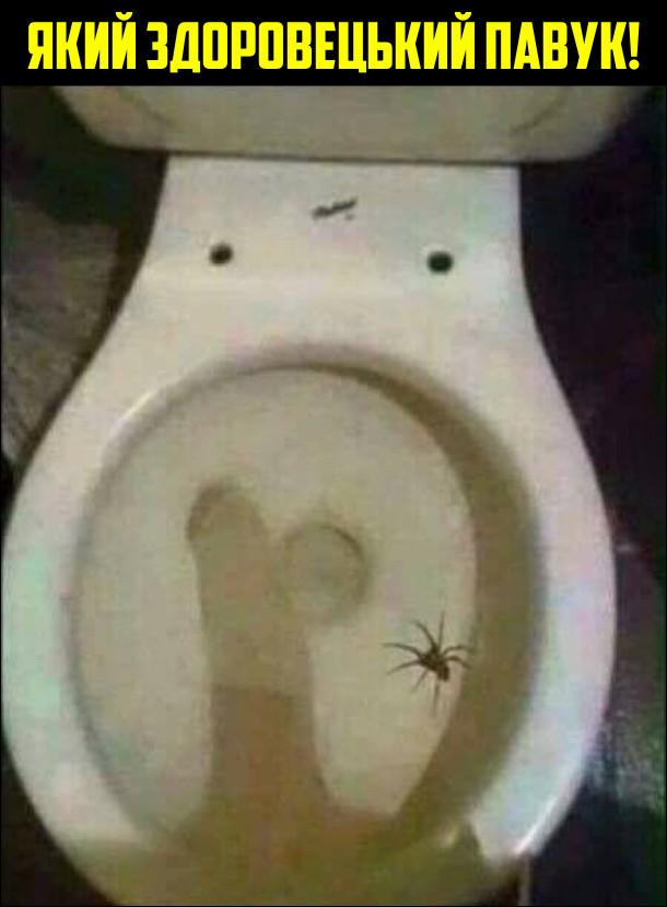 Який здоровецький павук! На унітазі лазить павук і також на унітаз падає тінь від великого пеніса