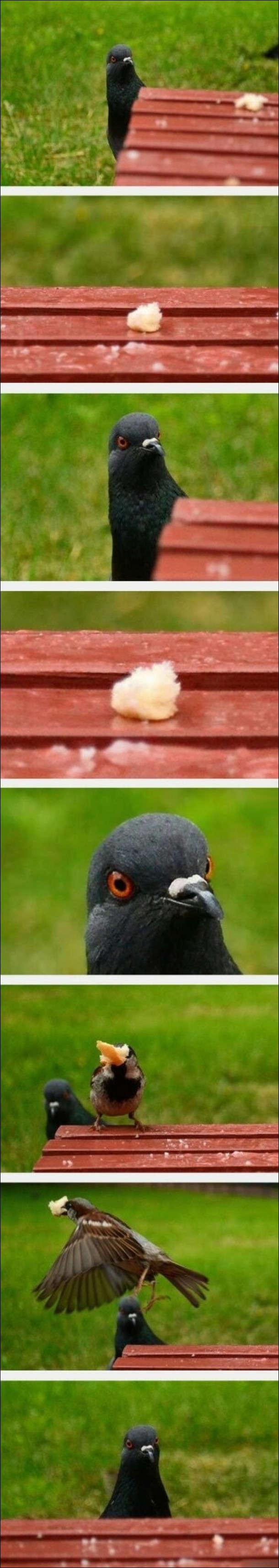 Голуб побачив на лавочці крихту хліба. Пока він на неї зачаровано дивився, підлетів горобець і забрав хліб