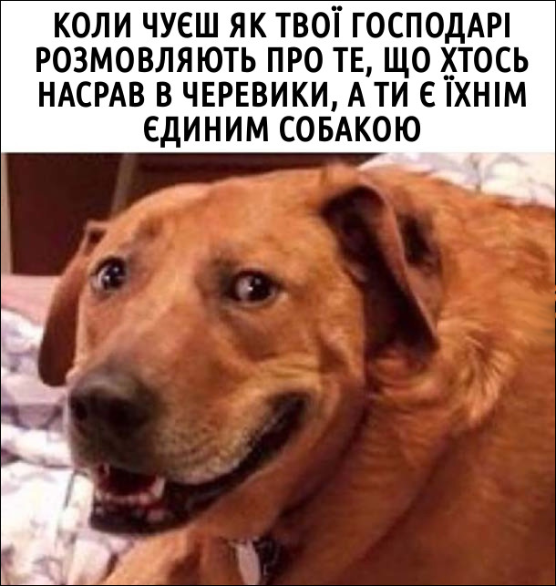 Коли чуєш як твої господарі розмовляють про те, що хтось насрав в черевики, а ти є їхнім єдиним собакою