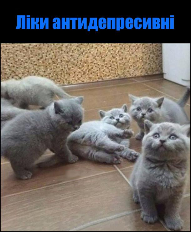 Ліки антидепресивні - сірі пухнасті кошенята