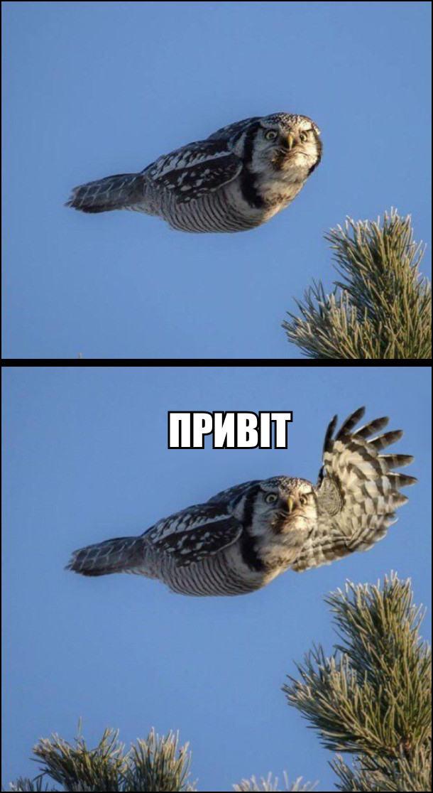 Летить сова, махнула одним крилом: - Привіт