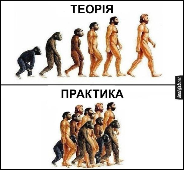 Прикол, жарт про еволюцію. Теорія: еволюція від мавпи до людини. Практика: і мавпи, і мавпоподібні, і люди йдуть по життю одночасно