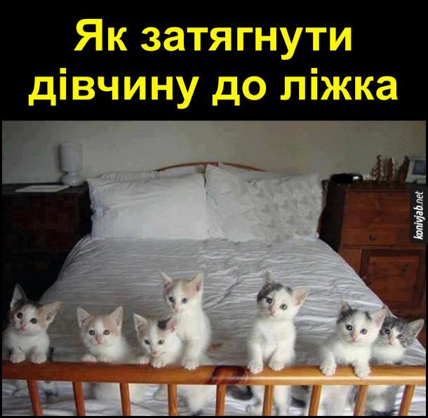 Як затягнути дівчину до ліжка. На ліжку семеро маленьких симпатичних кошенят - жодна дівчина не встоїть