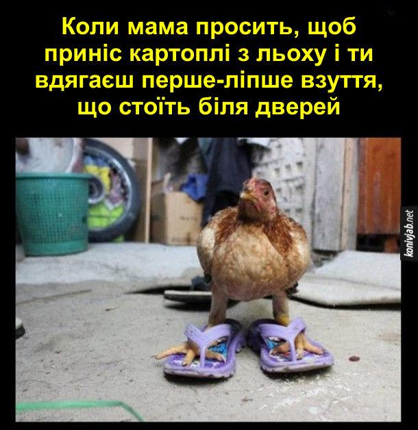 Коли мама просить, щоб приніс картоплі з льоху і ти вдягяєш перше-ліпше взуття, що стоїть біля дверей. Курка в капцях