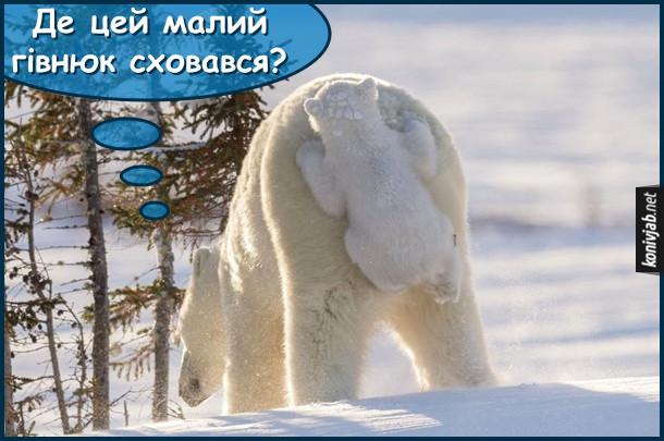 Прикол про ведмедів. Смішне біле полярне ведмежа і його мама. Ведмедиця ходить і шукає ведмежаа він в цей час бовтається вчепившись за її сідниці. Ведмедиха: - Де цей малий гівнюк сховався?