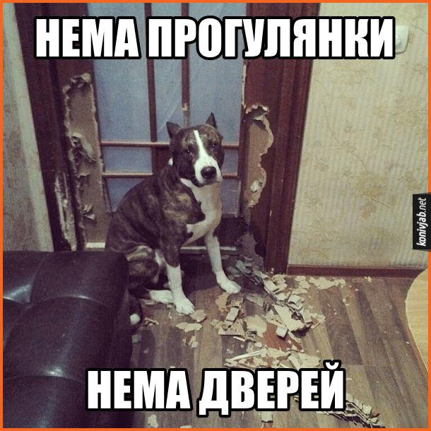 Собача помста. Пес погрих двері. Нема прогулянки - нема дверей