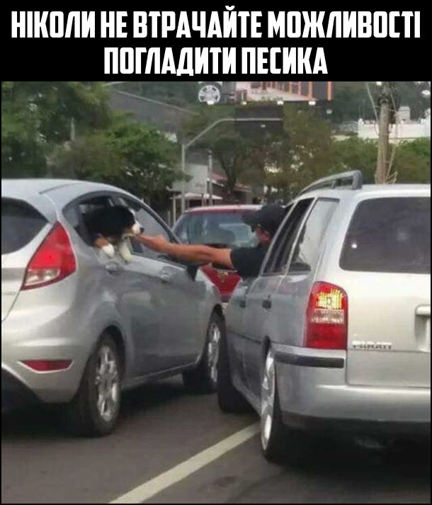 Ніколи не втрачайте можливості погладити песика. В дорожньому заторі з вікна однієї з машин виглядає собака. З водій машини, що стояла поряд, відкрив вікно і гладить собаку