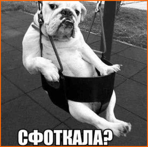 Діловий собака позує, сидячи в гойдалці. Питає: Сфоткала?