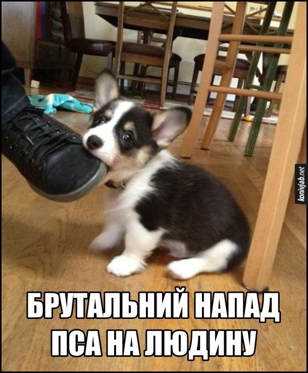 Брутальний напад пса на людину. Насправді це маленький песик намагається вкусити за ногу