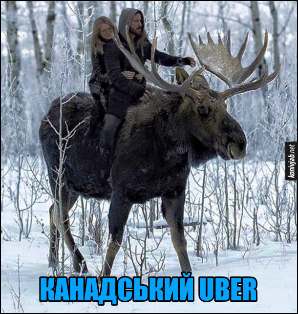 Канадський UBER (Убер) - хлопець з дівчиною їдуть верхи на великому лосеві