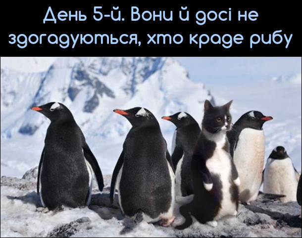 Прикол про пінгвінів. Смішне фото. Серед пінгвінів затесався чорно-білий кіт. День 5-й. Вони й досі не здогадуються, хто краде рибу