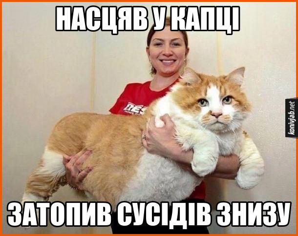 Прикол Дуже великий кіт на руках в господині. Насцяв у капці - затопив сусідів знизу