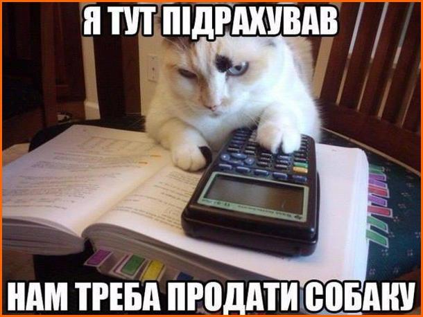 Кіт з калькулятором. Кіт сидить з калькулятором. Я тут підрахував - нам треба продати собаку