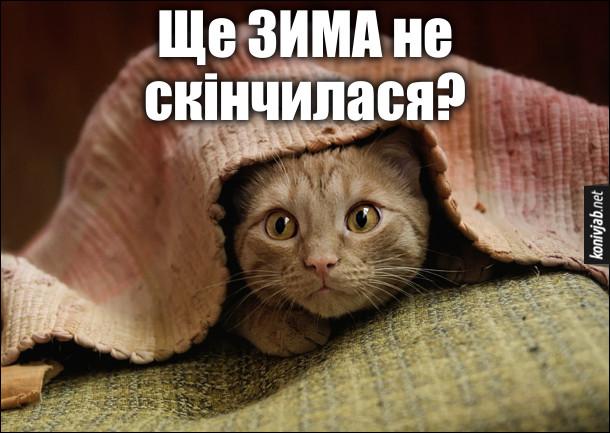 Мем про холод, холоднечу, холодригу. Кіт виглядає з-під ковдри і питає: - Ще зима не скінчилася?