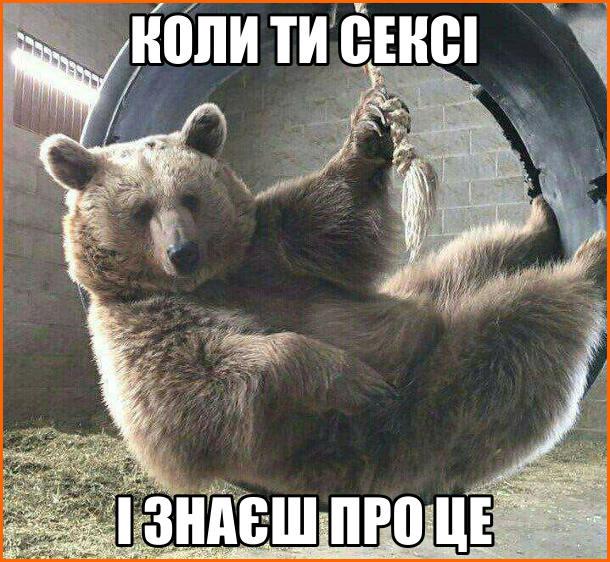 Смішний ведмідь на гойдалці. Це відчуття, коли ти сексі і знаєш про це
