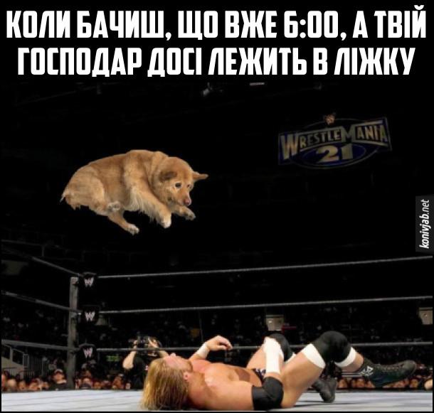 Як типовий пес будить зранку. Коли бачиш, що вже 6:00, а твій господар досі лежить в ліжку. Фото, де на wrestlemania собака цибає на лежачого реслера