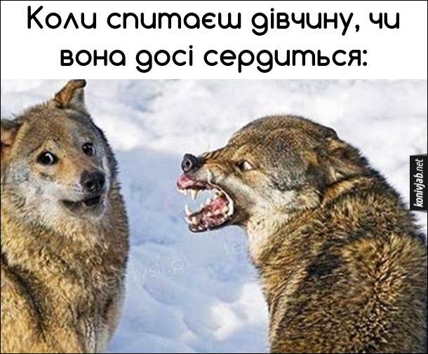 Жарт про вовків. Коли спитаєш дівчину, чи вона досі сердиться. Вовчиця страшно вишкірила зуби і ричить, а вовк стоїть переляканий