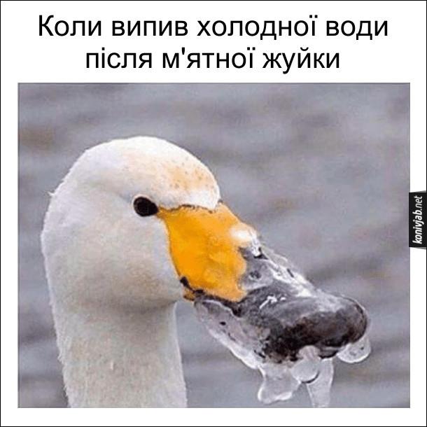 Жарт про холод. Коли випив холодної води після м'ятної жуйки. Гусак з замерзлим дзьобом