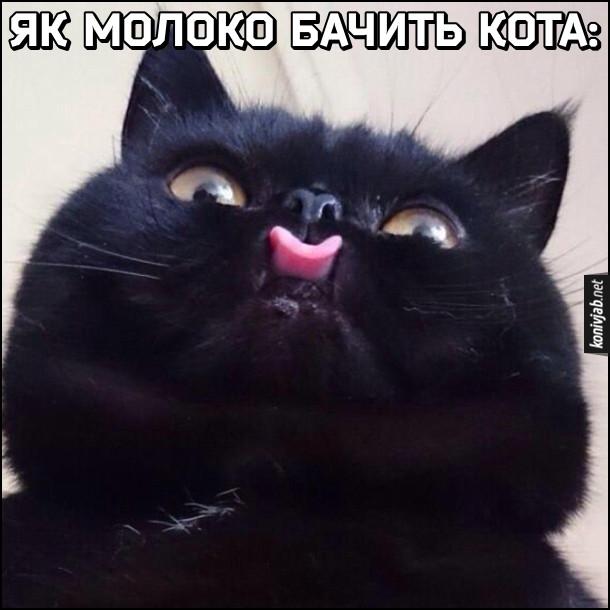 Прикол Кіт п'є молоко. Як молоко бачить кота: чорний кіт висолопив язика