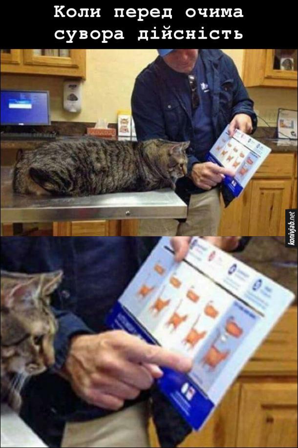 Жирний кіт. Господар показує коту, ветеринарну таблицю, де вказана надлишкова вага котів. І він на останній стадії ожиріння