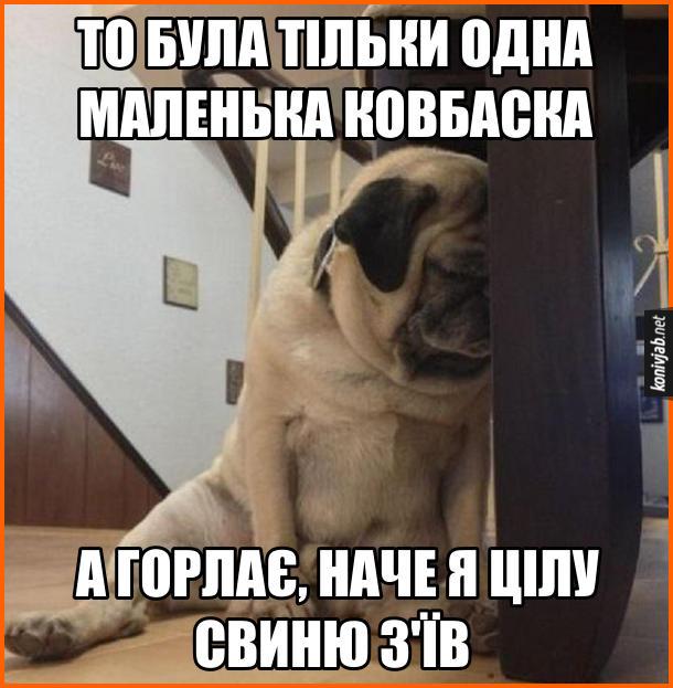 Жарт про собаку мопса. Сидить собака на підлозі і зажурено сперся об ніжку стільця. - То була тільки одна маленька ковбаска, а горлає, наче я цілу свиню з'їв