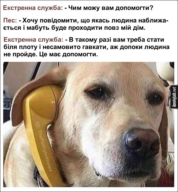 Чому собаки гавкають. Жартівливе фото. Собака телефонує в екстренну службу. Екстренна служба: - Чим можу вам допомогти? Пес: - Хочу повідомити, що якась людина наближа- ється і мабуть буде проходити повз мій дім. Екстренна служба: - В такому разі вам треба стати біля плоту і несамовито гавкати, аж допоки людина не пройде. Це має допомогти.