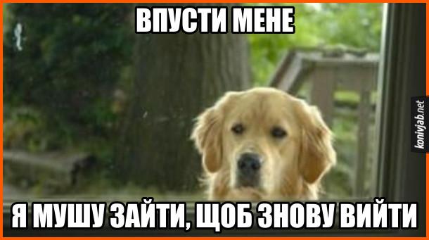 Мем про пса. Собака стоїть за вікном і каже: - Впусти мене, я мушу зайти, щоб знову вийти