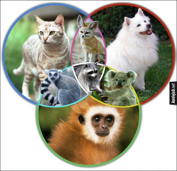 Жарт про тварин. Походження деяких видів тварин. Між котом, собакою і мавпою є перехідні ланки: лисиця фенек, коала, лемур і єнот