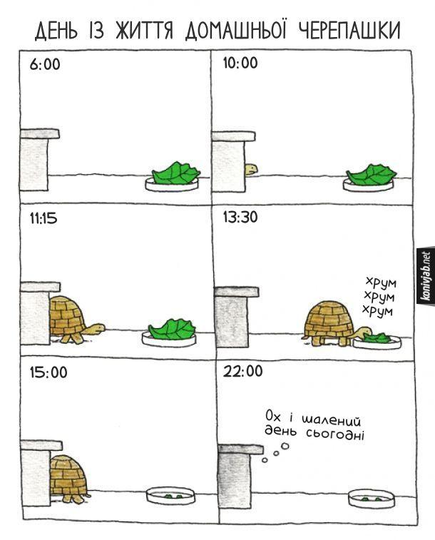 Комікс про черепаху. День із життя домашньої черепашки. Черепашка побачила на тарілці листок салату. Пів дня йшла до тарілки, з'їла листок (хрум, хрум, хрум) і потім ще пів дня йшла назад до схованки. Наприкінці дня (о 22:00) черепашка подумала: - Ох і шалений день сьогодні