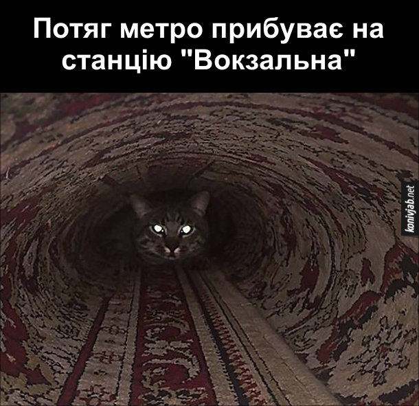 """Жарт про метро. Потяг метро прибуває на станцію """"Вокзальна"""". А насправді то кіт сидить в скрученому трубою килимі і виблискує очима"""