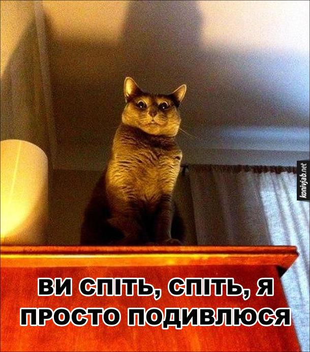 Кіт смішний і страшний. Кіт сидить на шафі і дивиться донизу. Світло від лампи робить його обличчя зловісним. Кіт: - Ви спіть, спіть, я просто подивлюся