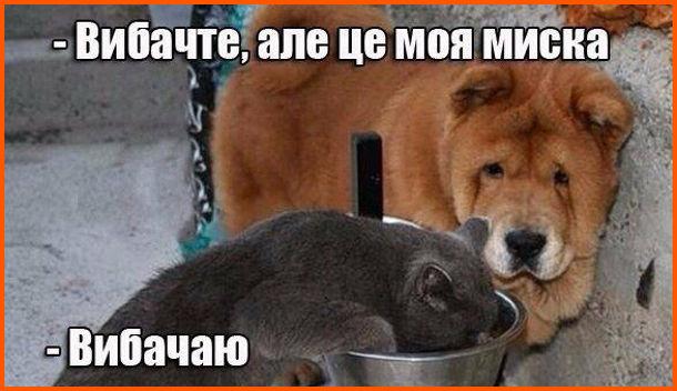 Жарт про кота і собаку. Кіт їсть з собачої миски. Підходить пес: - Вибачте, але це моя миска. Кіт: - Вибачаю
