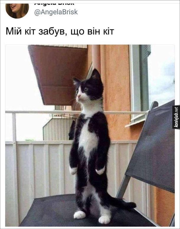 Смішна фотка: Кіт на стоїть задніх лапах. Мій кіт забув, що він кіт