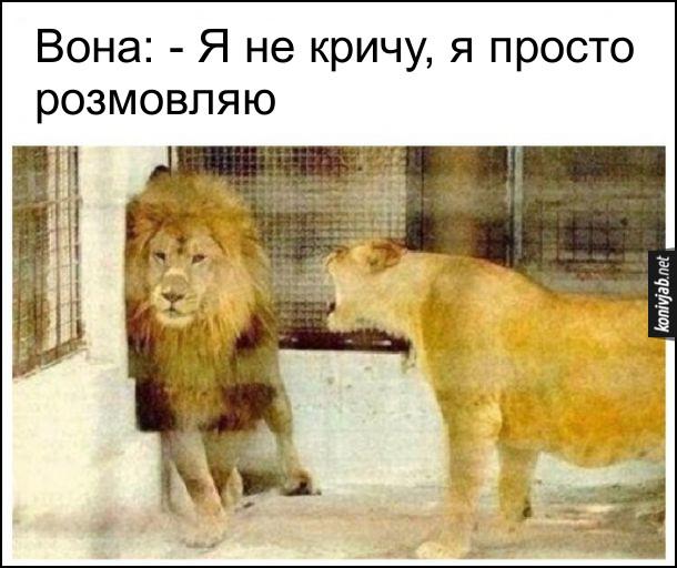 Жарт про левів. Лев і левиця, левиця гарчить на лева. Вона: - Я не кричу, я просто розмовляю