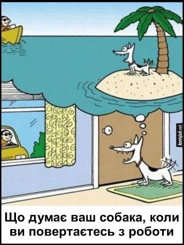 Прикол про собаку. Що думає ваш собака, коли ви повертаєтесь з роботи на авто. Пес уявляє, ніби він на безлюдному острові, а господар пливе до нього на катері