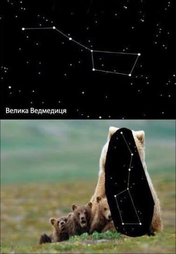 Прикол Велика ведмедиця. Велика ведмедиця на небі і справжня ведмедиця у вигляді небесної йде з ведмежатами