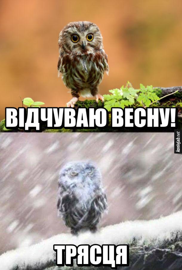 Прикол холодна весна. Совиня сидить на гілці: - Відчуваю весну! Тут почалась заметіль. Сова: - Трясця