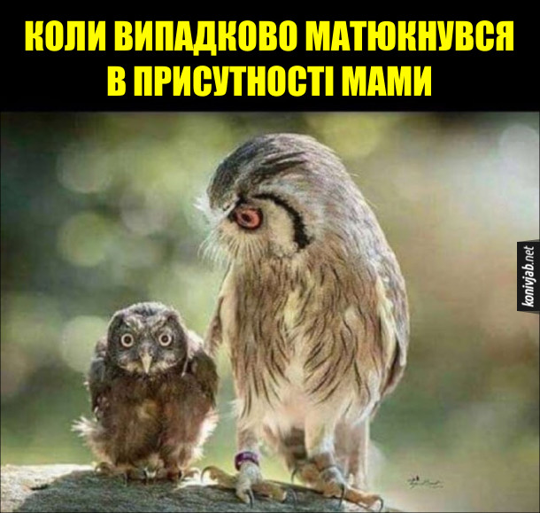 Смішні сови. Коли випадково матюкнувся в присутності мами. Совиня перелякано дивиться поперед себе, а сова-мати строго на нього поглядає