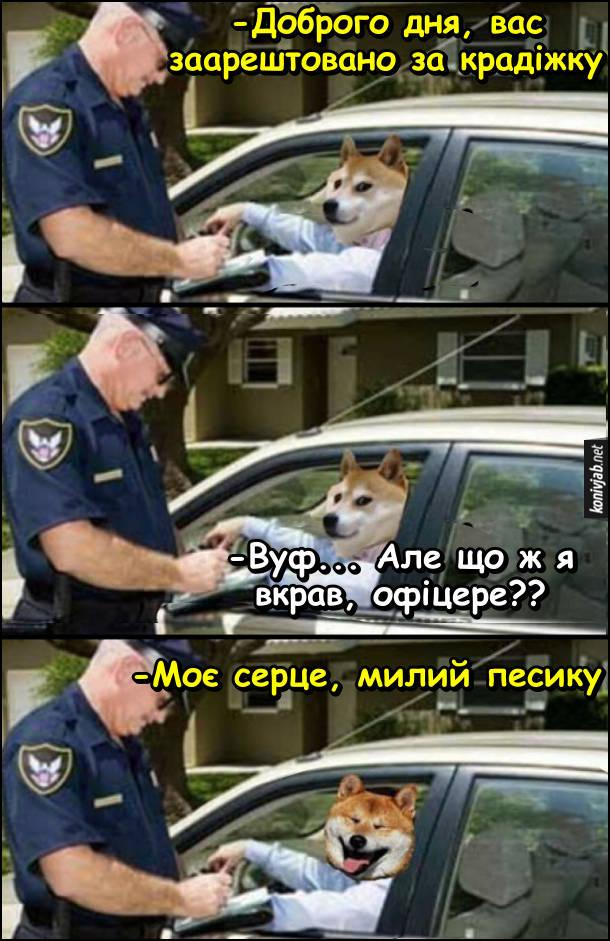 Собака за кермом. Поліцейський зупинив авто в якому за кермом сидить собака. Поліцейський: - Доброго дня, вас заарештовано за крадіжку. Собака: - Вуф... Але що ж я вкрав, офіцере?? Поліцейський: - Моє серце, милий песику