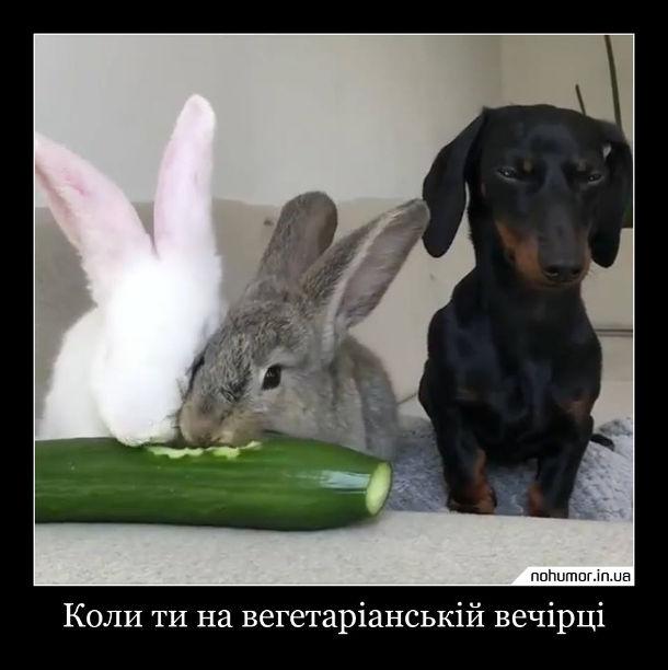 Вегенська вечірка. Коли ти на вегетаріанській вечірці. Два кролі їдять огврка, а песик сидить поряд і нічого не їсть