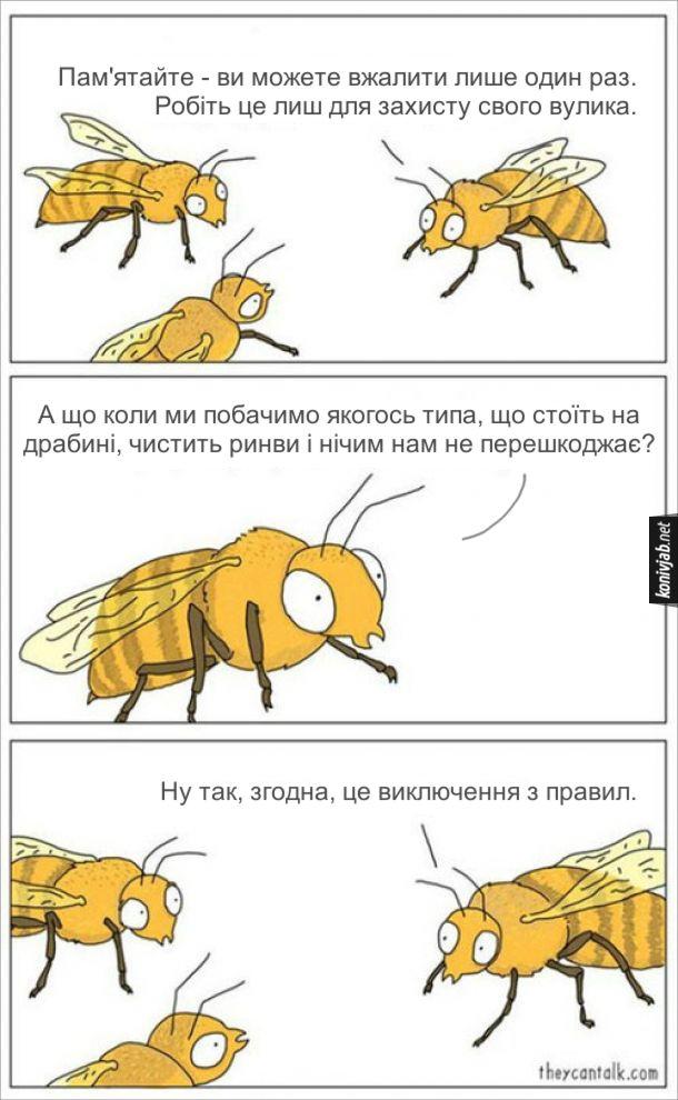 Смішний комікс про бджіл. Головна бджола інструктує молодих бджіл: - Пам'ятайте - ви можете вжалити лише один раз. Робіть це лиш для захисту свого вулика. - А що коли ми побачимо якогось типа, що стоїть на драбині, чистить ринви і нічим нам не перешкоджає? - Ну так, згодна, це виключення з правил