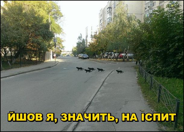 Прикол чорний кіт через дорогу. Йшов я, значить, на іспит, а переді мною через дорогу перейшло п'ять чорних кішок