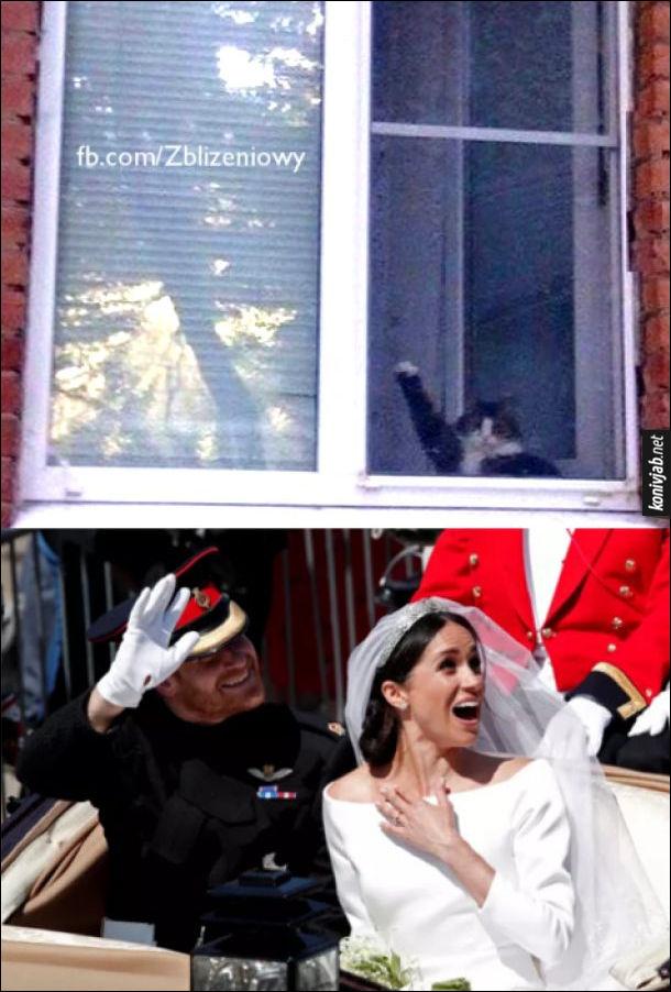 Жарт про принца Гаррі і Меган Маркл, що їдуть у весільному екіпажі. Кіт з вікна махає їм лапою, Гаррі махає у відповідь, Меган захоплено дивиться на кота
